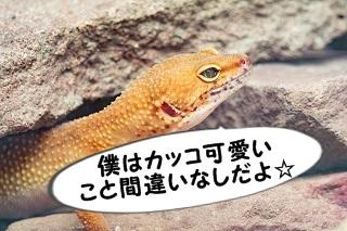 gecko-3195466_960_720